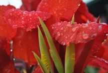 Fleurs / #Fleur #Flower #Blumen