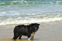 Chiens / #Chien #Dog #Hund
