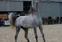Chevaux et cousins / Chevaux Horse Pferd Âne Zèbre Zebra Donkey