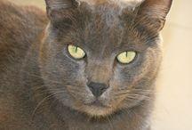 Chat / Chat Cat Katze