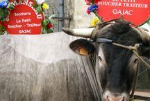 Animaux de la Ferme / Cattle Vache Cow Kuhe Chèvre Goat Sheep Mouton AnimauxdelaFerme