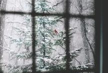 wintered. / little wishes, hopes, memories and epiphanies that Christmas and the wintery season brings! but most of all the joy shared at the remembrance of Christ's birth.