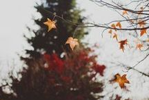 you beautiful autumn, you. / o autumn, I knew you'd come around.
