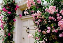 Flowers and landscaping