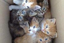 Kitty Cat Cuteness