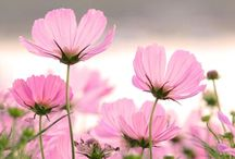 FLOWERS ~PINK