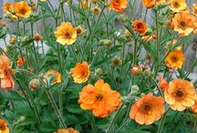 FLOWERS ~ORANGE