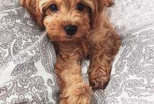 Future Pup!