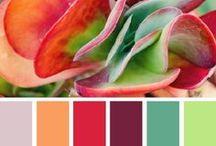 {Couleurs inspiration branding} / Palettes de couleurs inspirantes pour créer son image d'entreprise.