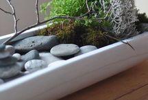 Gardens / Ideas