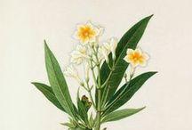 Botanical prints...