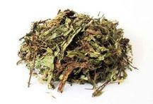 Adoçantes - Natural Sweeteners / Apresentamos a Stévia, uma planta naturalmente doce e indicada para diabéticos.
