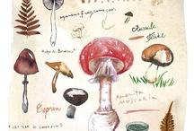 Autumn & Harvest Inspiration / by Amy Devine