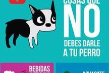 vida saludable para tu perro