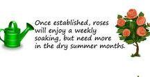 Roses Love It! / Check useful items here: http://www.fertilisersonline.com.au/fertilisers.html?purpose2=40