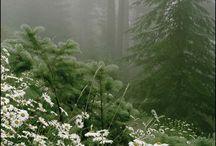 misty garden