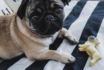 Emma Mops / Pug |Mops |Puglover