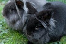 Everthing Rabbit