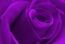 Purple Please / Favorite color