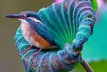 Beautiful Birds / Our lovely and sometimes fierce feathered friends.