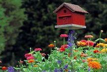Growing Gardens / Things to do in the garden