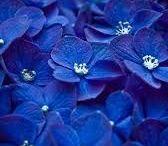 Blue ❤