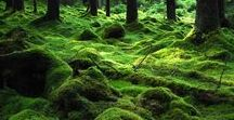 Magic Forest / De grandes et belles forêts à deux pas de la ville...