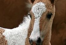 Loving My Beautiful Horses..... / <3 / by IZaBeLLa