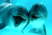 Dolphins❤️ / So cute and lovable..I love Dolphins..and make sure you eat dolphin friendly tuna. x / by Lolly💖 Pop💖