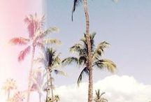 SUMMER / It's all about Palm Trees, and 80 degrees / by Abigail Funk
