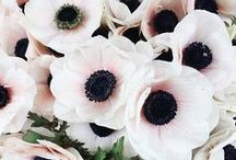 Spring Wedding Flowers / Great flower choices for spring weddings
