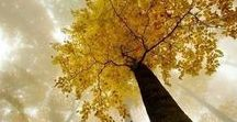 The Tree Of Life / God's Green Earth! What would it be like without Beautiful Trees!!