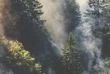 풍경, 식물