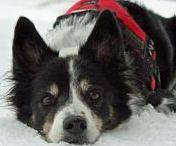 Gesundheit / Hier findet ihr verschiedene Themen rund um den Komplex Hundegesundheit.