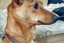 Zuhause gesucht / Immer mal wieder passiert es mir, dass ich im Internet auf Hunde stoße, die im Tierheim oder auf einer Pflegestelle sitzen, ein Zuhause suchen und die es mir dabei einfach ganz besonders antun. Um deren Chance auf eine Vermittlung zu erhöhen, möchte ich solche Hunde hier mit euch teilen. Und bevor die Frage aufkommt: Nein! Ich will selber keinen dritten Hund ;)
