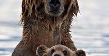 Orsi/Bears