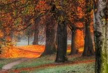 Fall  / I love Autumn..the colors, Cider, Bonfires, Pumpkin Patch, Harvest Time,Crisp air, Sweater, Cinnamon,Weather, Rainy days,Boots, Extremely Beautiful Parks.. KEEP CALM AND ENJOY FALL.