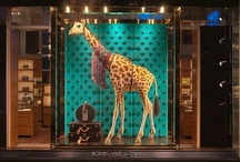 shop windows and display
