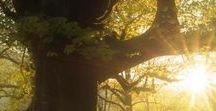 Grunwald Forest / Journey through an enchanted forest