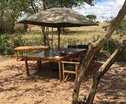 Kenya Safari / Kenya Safari | Travel & explore the world from a Maasai Mara safari to the beaches of Mykonos • Tips for your next vacation adventure • Travel blogging advice | VivaSouth.com