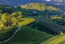 Sekrety Tajwanu / Tajwan i bogactwo Tajwanu: w szczególności wspaniałe herbaty...na zdrowie!  www.readyherbs.eu