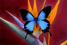 Butterflies Reborn