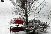 For the Birds / Keep the birds happy with these great ideas for birdhouses, bird feeders, and bird feeding tips.