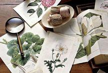 art - botanical art / by Kimberly Hansen