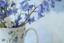 flowers / by Kimberly Hansen