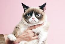Tard (AKA Grumpy Cat) / I love this kitteh / by Stephanie Loren Eades
