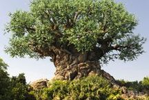 Animal Kingdom / All about Disney's Animal Kingdom park in Walt Disney World / by Lou Mongello