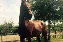 True love / Horses