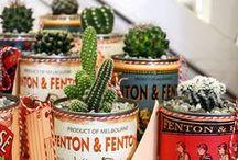 Cactus / Suculentas