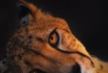 [ d&d ] - smoke / ( D&D // PLUME OF SMOKE ) - - Cheetah / Tabaxi. Rogue. Eldest child of her family. She became a rogue to support her family as they live in poverty. If she gets money out of doing something, she'll most likely do it.
